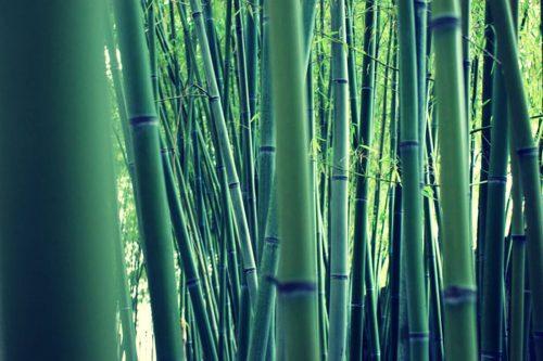 canas-tutores-bambu