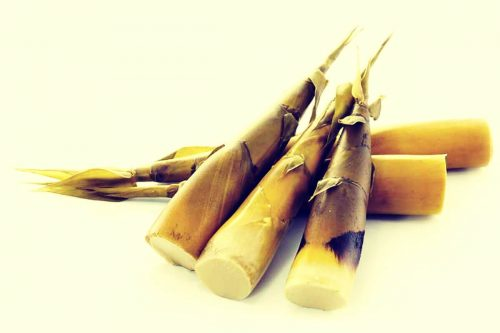 brotes-bambu